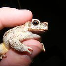 Arizona Desert Toad by Jonathon Wuehler