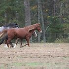 Smokey Mountain Wild Horses by Diane McDonald