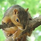 Hang On Little One! (Baby Squirrel) by lorilee