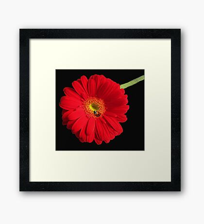 Little Lady Bug Framed Print