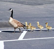 The Goose Lead by Jonathon Wuehler