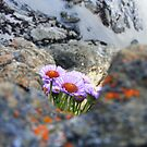 Purple Blooms on Ocean Cliff by Jonathon Wuehler