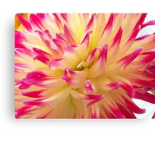 Pink-tipped creaminess Canvas Print