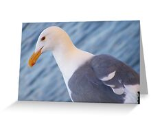 Seagull Stare Greeting Card
