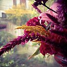 Fuzzies ~ in the Window by Barbara Wyeth