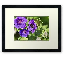 In an English country garden Framed Print