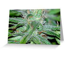 Trichomes Galore  Greeting Card