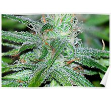 Trichomes Galore  Poster