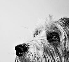 Portrait by Anne Staub