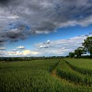 Barley in Winchester by NeilAlderney