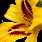 Yellow Orchard by KChisnall