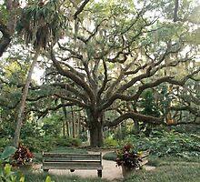 Washington Oaks by KatrinaPeterson