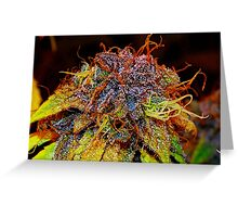 Blueberry Buds Greeting Card