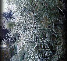 Frosty fronds by revana
