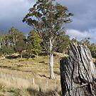 Loongana bush - Tasmania by gaylene