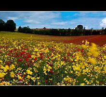Rape and Poppys by RichardFTaylor