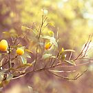Branch of kumquats in spring garden by paralingua