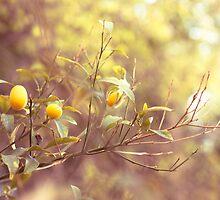 Branch of kumquats in spring garden by paralingua