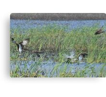 Osprey attack Canvas Print