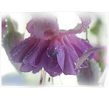 Pastel Fuchsia Dream Poster