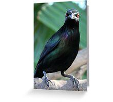 Metalic starling Greeting Card