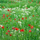 June field by Fran0723