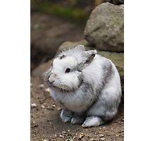 rabbit in the forest Photographic Print