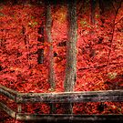 Red forest by Andre Faubert