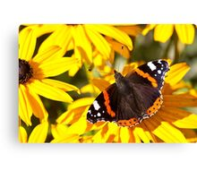 Red Admiral;Yellow Flower Canvas Print