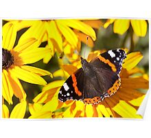 Red Admiral;Yellow Flower Poster