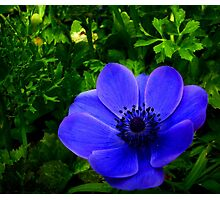Hidden Blue Photographic Print
