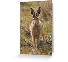 Brown Hare Greeting Card