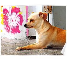 Small Dog and a Large Pink Flower Poster