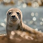 Sparkling Seal by John Dewar