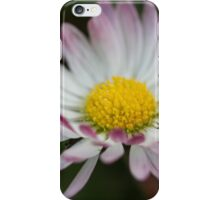 daisies in spring iPhone Case/Skin