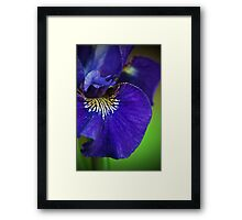 Deep Purple Framed Print