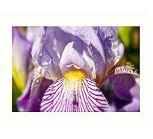 Iris,,, showered  Art Print