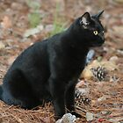 Halloween Kitty by DebbieCHayes