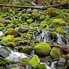 Mossy Rocks by Steven Olmstead