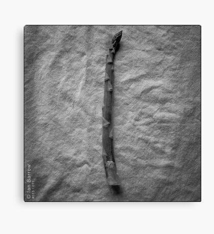 Asparagus Spear Canvas Print