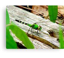 Vibrant Green Dragonfly Canvas Print