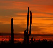 Saguaro sunset collection #10 by Dan Perry
