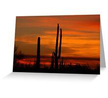 Saguaro sunset collection #10 Greeting Card