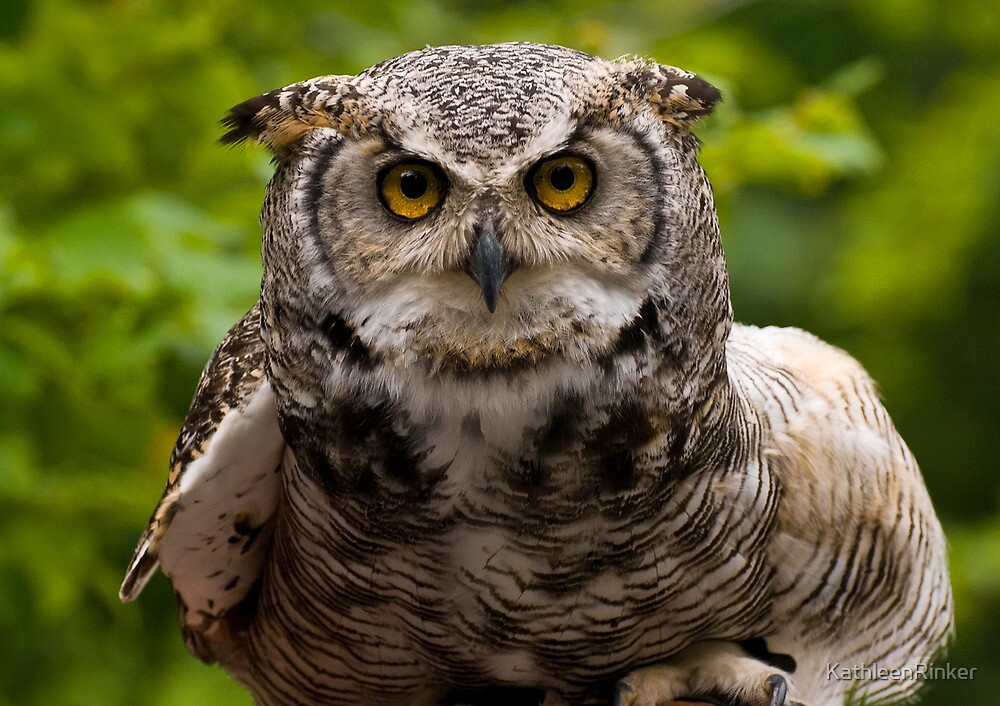 an owl named arthur by KathleenRinker