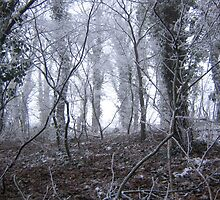 Frosty Foggy Trees by 2doorcinemaclub