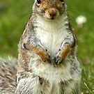 What you looking at Nutty! by Mark Hughes
