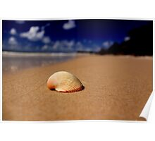 Shell on beach Poster