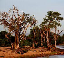 Out of Africa - Samburu by Sally Haldane