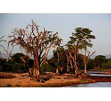 Out of Africa - Samburu Photographic Print