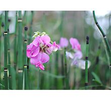 Pink in Green Photographic Print